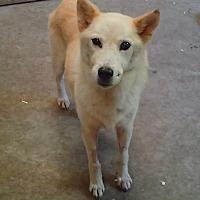Adopt A Pet :: Heidi - Ravenel, SC
