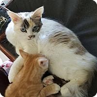 Adopt A Pet :: Mhysa - Orange, CA