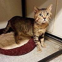 Adopt A Pet :: C-20 - Indianola, IA