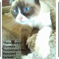 Adopt A Pet :: Bella Bunny - El Cajon, CA
