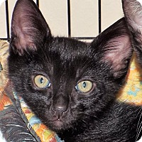 Adopt A Pet :: PJ - Grants Pass, OR