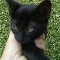Adopt A Pet :: Miss Kitty - Elgin, OK