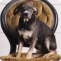 Adopt A Pet :: Oliver Wood - Portland, OR