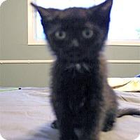 Adopt A Pet :: Ira - Mississauga, Ontario, ON