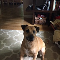 Adopt A Pet :: Duke (COURTESY POST) - Baltimore, MD