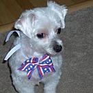 Adopt A Pet :: Lambsie