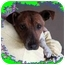 Photo 3 - Jack Russell Terrier Dog for adoption in Fort Wayne, Indiana - Alan