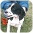 Photo 3 - Cocker Spaniel Dog for adoption in cedar grove, Indiana - Sophia