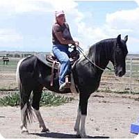 Adopt A Pet :: Lincoln - Pueblo, CO