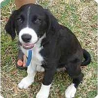 Adopt A Pet :: Zack - Kingwood, TX
