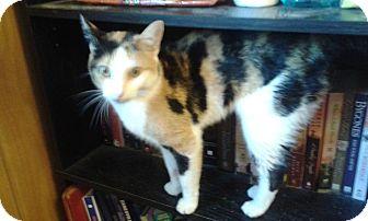 Calico Cat for adoption in Zanesville, Ohio - Sparkle