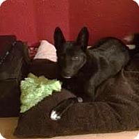 Adopt A Pet :: Anna - Saskatoon, SK
