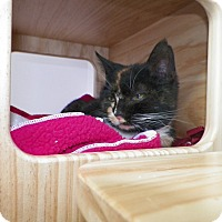 Adopt A Pet :: Harlem - Dover, OH