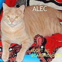 Adopt A Pet :: Alec - Holden, MO