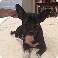 Adopt A Pet :: Tia - San Antonio, TX