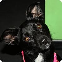 Adopt A Pet :: Jackson NJ - Cassi - New Jersey, NJ