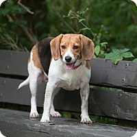 Adopt A Pet :: Tally - Drumbo, ON