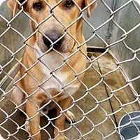 Adopt A Pet :: Reacher - ADOPTED! - Zanesville, OH