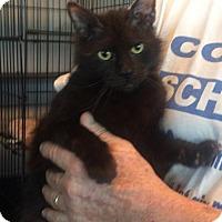 Adopt A Pet :: Renae - Slidell, LA