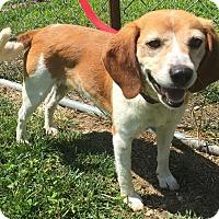 Adopt A Pet :: Azalea - Morehead, KY
