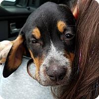 Adopt A Pet :: Jordan - Gainesville, FL
