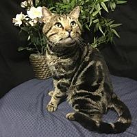 Adopt A Pet :: Oliver - FIV+ - Fayetteville, GA