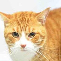 Adopt A Pet :: Zuma - New York, NY