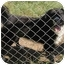 Photo 2 - Australian Shepherd/Border Collie Mix Dog for adoption in Cairo, Georgia - Rascal