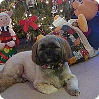 Adopt A Pet :: Rascal - Crofton, MD