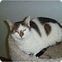 Adopt A Pet :: Bugsy - Hamburg, NY