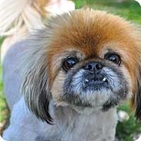 Adopt A Pet :: Charlie & JJ - Richmond, VA