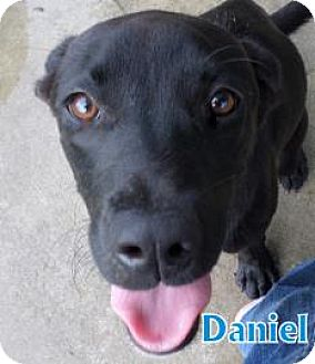 Retriever (Unknown Type) Mix Dog for adoption in Georgetown, South Carolina - daniel