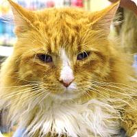 Adopt A Pet :: Garfield - Pittstown, NJ