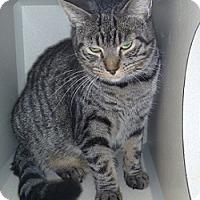 Adopt A Pet :: Sweet Melody - Hamburg, NY