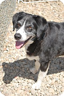 Border Collie Mix Dog for adoption in Berea, Ohio - Sky