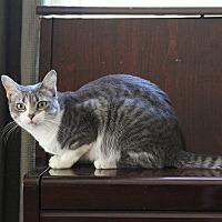 Adopt A Pet :: Opal III - Chandler, AZ
