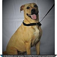 Adopt A Pet :: Diamond - Sherman, CT