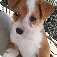 Adopt A Pet :: Di - Quinlan, TX
