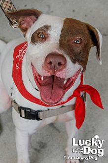 Terrier (Unknown Type, Medium) Mix Dog for adoption in Washington, D.C. - Petey