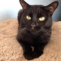 Adopt A Pet :: Mai - Alamogordo, NM