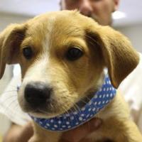 Adopt A Pet :: Jack - Cleveland, AL