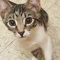 Adopt A Pet :: Bentley - Marina del Rey, CA