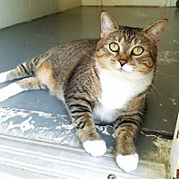 Adopt A Pet :: Soba - Umatilla, FL