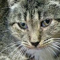 Adopt A Pet :: Sunshine - Williston Park, NY