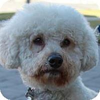 Adopt A Pet :: Aimee - La Costa, CA