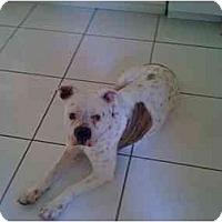 Adopt A Pet :: Lola - miami beach, FL