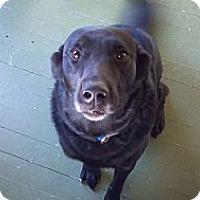 Adopt A Pet :: Dodger - Council Bluffs, IA
