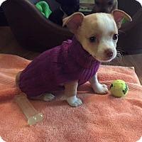 Adopt A Pet :: Rae - Homewood, AL