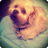 Adopt A Pet :: MOJO - Upper Sandusky, OH
