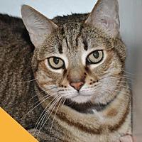 Adopt A Pet :: Kyeira - Roseville, CA